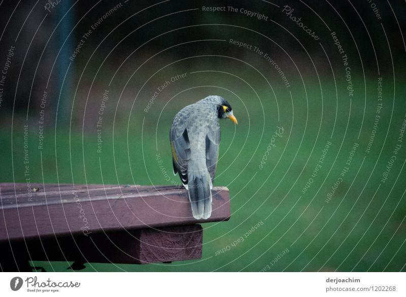 Kleine Vogel schaut nach rechts. Er sitzt auf einem Holztisch. Der Hintergrund ist verschwommen in Grün. exotisch Leben Ausflug Umwelt Schönes Wetter