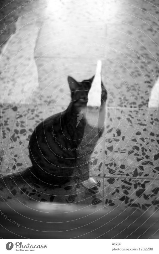Katzenleben Häusliches Leben Menschenleer Terrasse Fenster Glastür Glasscheibe Haustier 1 Tier hocken Blick warten Reflexion & Spiegelung Schwarzweißfoto