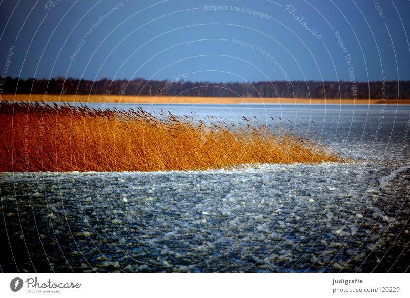 Eisig Winter kalt Vorpommersche Boddenlandschaft Dierhagen Darß Fischland Schilfrohr gefroren See Umwelt ruhig Januar Farbe bitter kalt grimmige eiseskälte