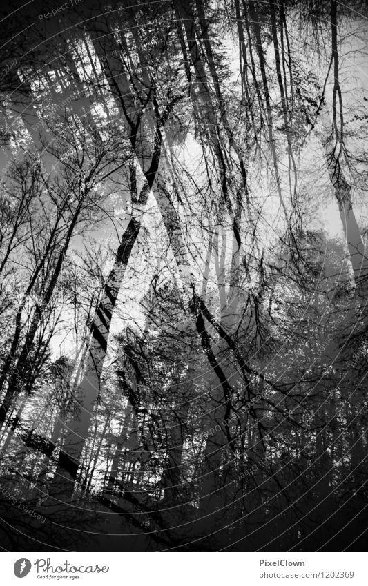 Wald Natur Ferien & Urlaub & Reisen Pflanze weiß Baum Landschaft Blatt Tier dunkel schwarz Stil Holz außergewöhnlich Lifestyle Stimmung