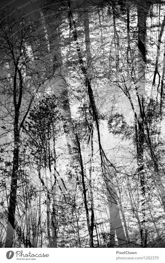 Die Natur steht kopf Ferien & Urlaub & Reisen Pflanze weiß Baum Landschaft Blatt Tier dunkel Wald schwarz Umwelt Stil Holz Kunst Stimmung