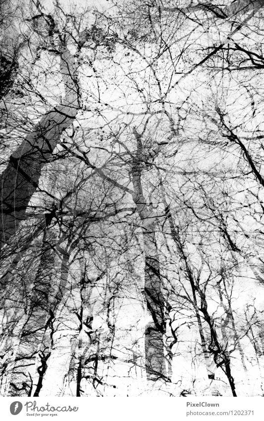 Wald Natur Pflanze weiß Tier Ferne schwarz Traurigkeit Gefühle Herbst Stil Holz außergewöhnlich Kunst Stimmung Park