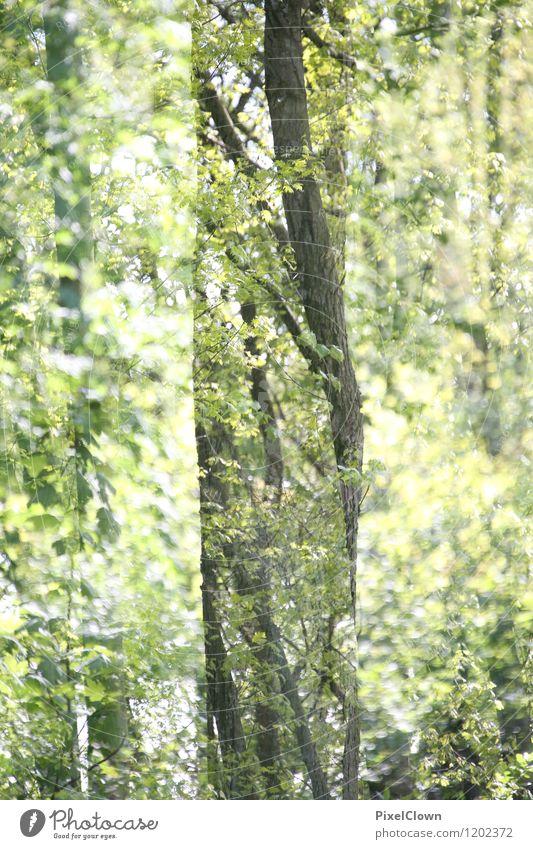 Märchenwald Natur Ferien & Urlaub & Reisen Pflanze grün Sommer Baum Erholung Landschaft Blatt Tier Wald Gefühle Holz Garten Lifestyle Kunst