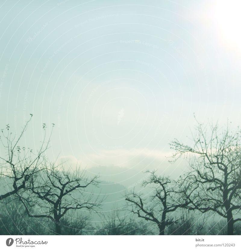 noch keine Kirschblüte-ohne Laternchen Baum Nebel Himmel Winter kalt eigenwillig Gärtnerei Vordergrund Hintergrundbild weich zart verweht Sandverwehung krumm