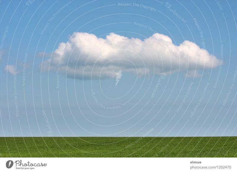 Dekowolke über grünem Acker Himmel Natur blau Pflanze weiß Erholung Landschaft Wolken Umwelt Frühling Glück Freiheit Zufriedenheit Feld Dekoration & Verzierung