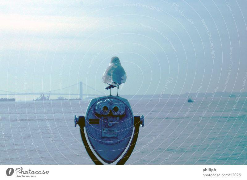 VogelPerspektive Fernglas Meer Möwe Aussicht New York City Fototechnik Stil lustig Rückansicht Ganzkörperaufnahme Vor hellem Hintergrund Freisteller drollig