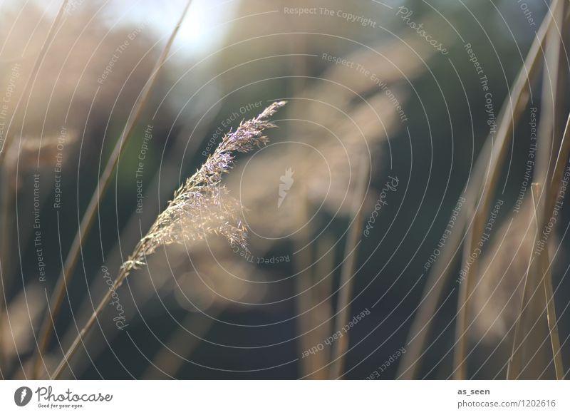 Gräser im Sommerwind Natur Pflanze Erholung ruhig Umwelt Wärme Bewegung Herbst Senior Gras braun Stimmung Lifestyle Zufriedenheit ästhetisch