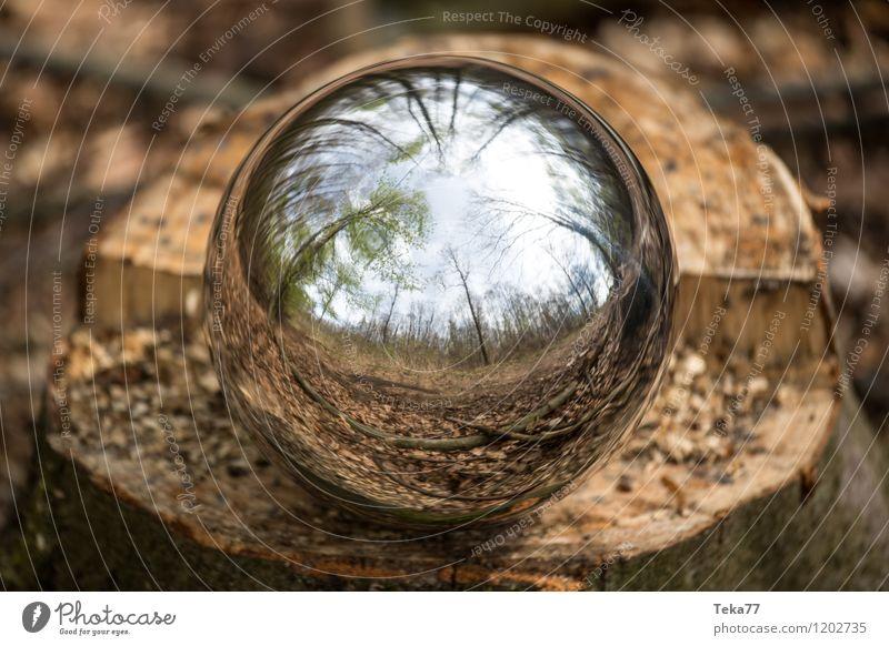 Waldkugel Natur Baum Umwelt ästhetisch Abenteuer Kugel Klimawandel Reflexion & Spiegelung