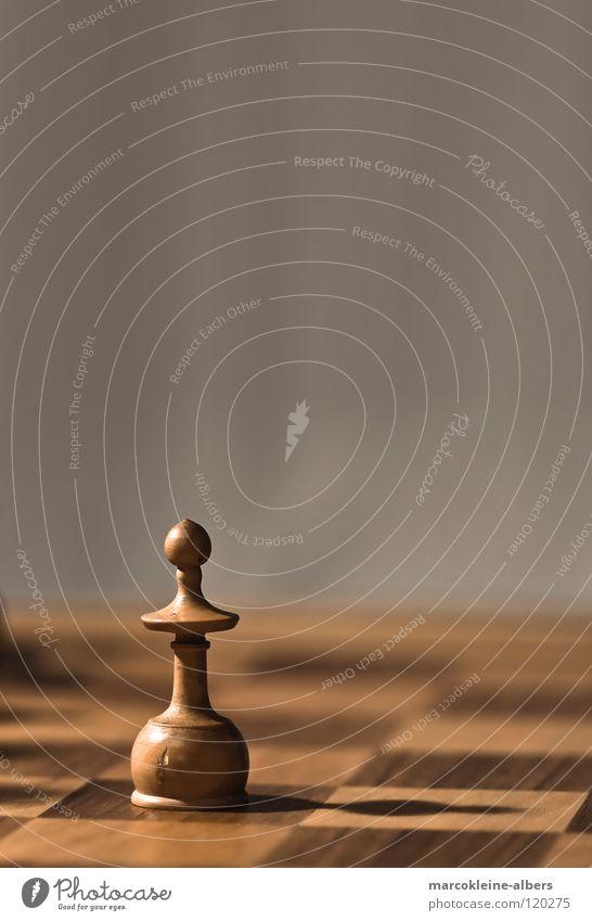 Einsame Schachfigur weiß Einsamkeit kalt Spielen braun Landwirtschaft Stillleben Schachbrett Vor hellem Hintergrund