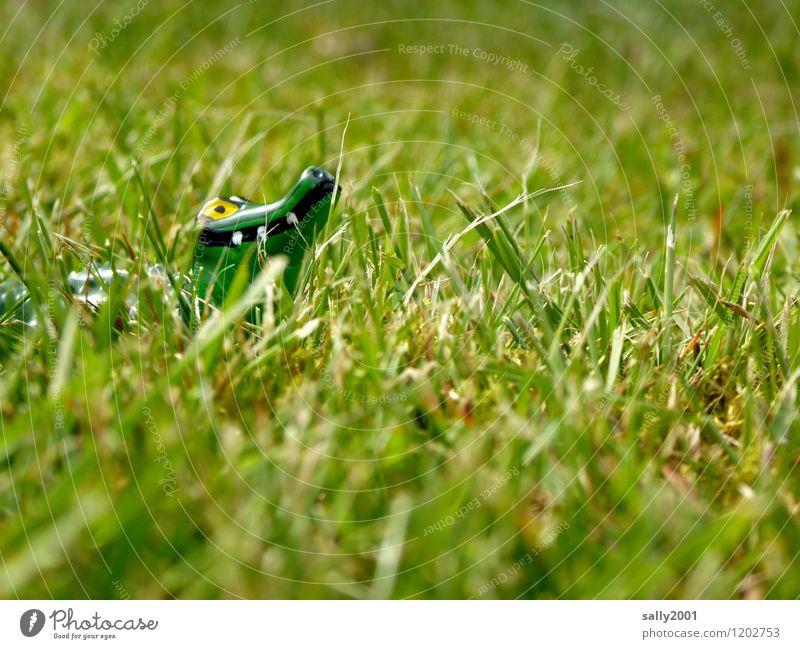 Gefährliches Tier auf Boden und Acker... Pflanze Gras Garten Park Wiese Krokodil Alligator 1 beobachten entdecken Jagd bedrohlich Neugier grün Überleben