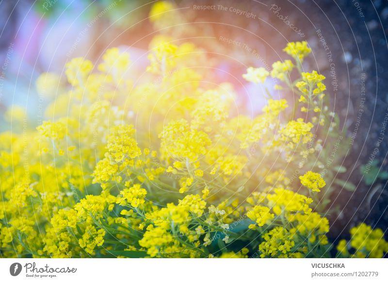 Gelbe Pracht im Garten Natur Pflanze Sommer Blume Blatt gelb Frühling Blüte Herbst Stil Hintergrundbild Lifestyle Park Design weich