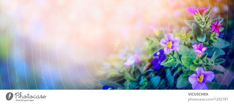 Lila Petunien im Traumgarten Stil Design Sommer Garten Natur Pflanze Sonnenaufgang Sonnenuntergang Frühling Herbst Schönes Wetter Blume Blatt Blüte Park Wiese