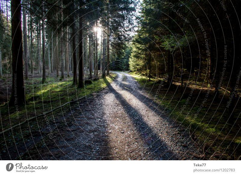 Der Waldweg Natur Sommer Baum Landschaft Umwelt springen Park ästhetisch Fußweg