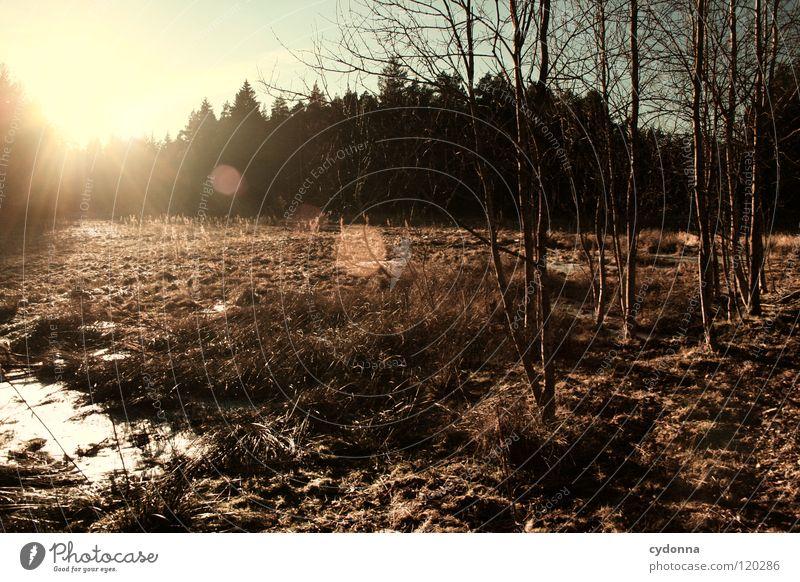 Im Gegenlicht Winter Einsamkeit ruhig Stimmung Sehnsucht Baum Wald Tanne Fichte Gedanke Erfahrung Jahreszeiten dunkel Waldrand geheimnisvoll Sonnenuntergang