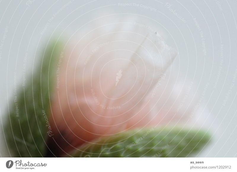 Zartheit elegant Design schön Kosmetik Wellness Leben harmonisch Sinnesorgane ruhig Spa Umwelt Natur Pflanze Luft Frühling Sommer Blume Wildpflanze Mohnblüte