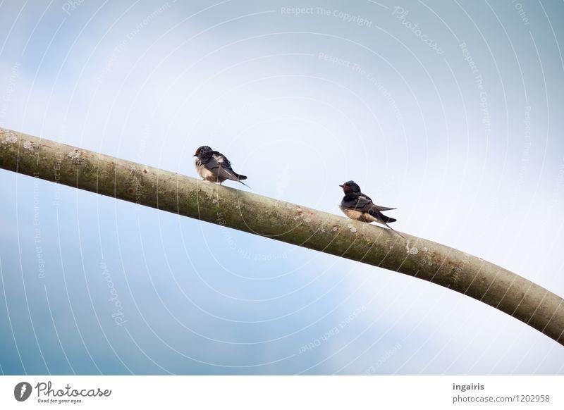 Sitzung halten Himmel blau weiß Tier schwarz Umwelt Vogel oben Metall Zufriedenheit sitzen frei warten Flügel beobachten einfach