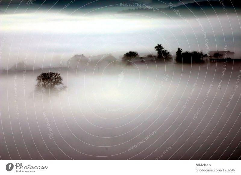 Nebel Dorf Baum Sträucher Nebelbank dunkel schwarz weiß Morgennebel Durchblick Tau Raureif kalt trist schlechtes Wetter Landleben mystisch Eifel Winter Himmel
