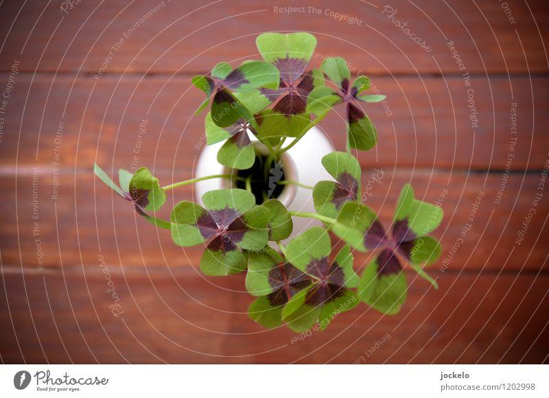 Die Eva wieder II Natur Pflanze schön grün Blatt Glück Garten braun Wildpflanze Kleeblatt Toleranz