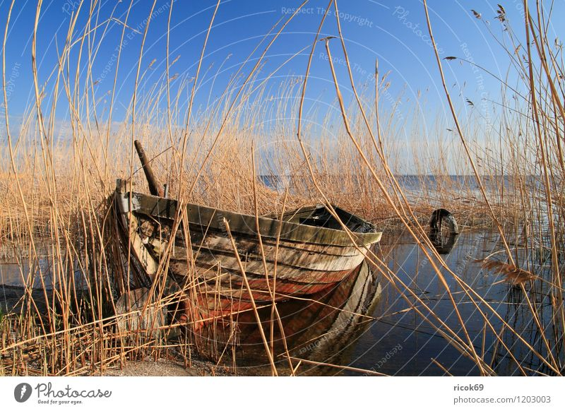 Boot im Schilf Natur Ferien & Urlaub & Reisen alt blau Wasser Meer Landschaft Umwelt gelb Küste Wasserfahrzeug Wetter Idylle Schönes Wetter Romantik Ostsee