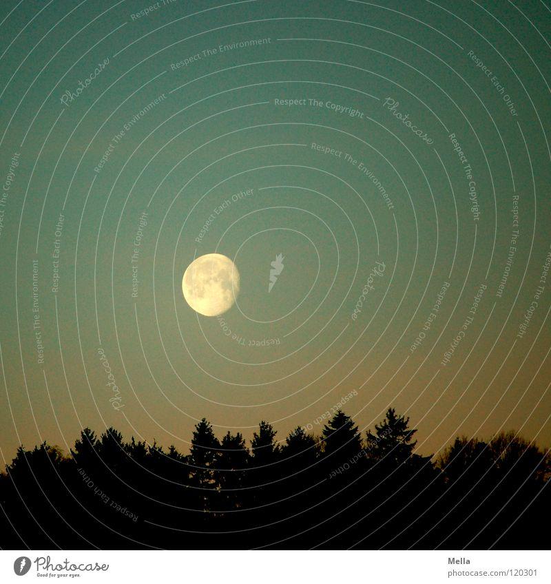 Herr Mond geht gleich schlafen Vollmond Halbmond abnehmend aufgehen Morgen Abend Wald Baum Beleuchtung Werwolf Wolf unheimlich Anziehungskraft Planet Galaxie