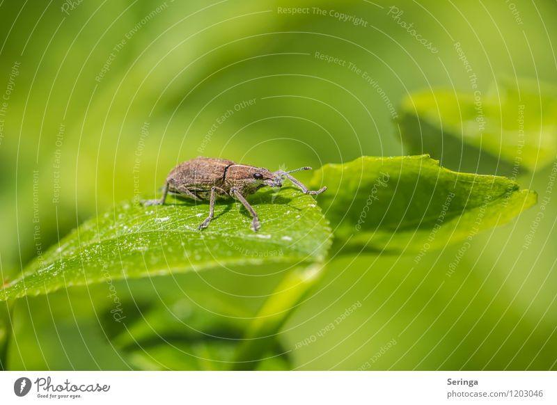 Paul der Käfer Umwelt Natur Pflanze Tier Sonne Sonnenlicht Frühling Sommer Baum Blume Gras Park Wiese Feld Wald Wildtier Tiergesicht Flügel 1 hässlich hell