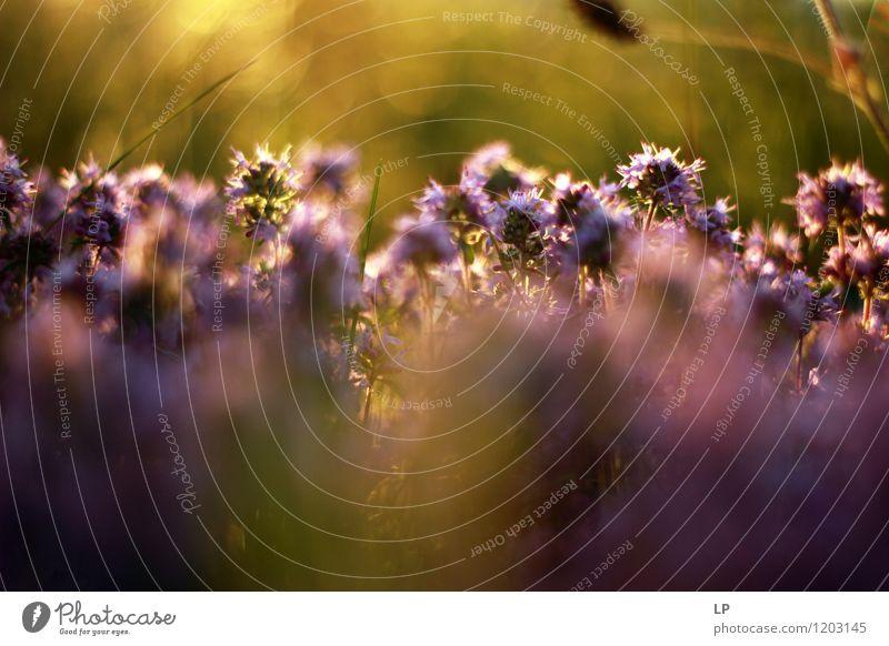 Natur Pflanze schön Farbe Erholung Blume Landschaft Umwelt gelb Wärme Wiese natürlich Gras Luft wild frisch
