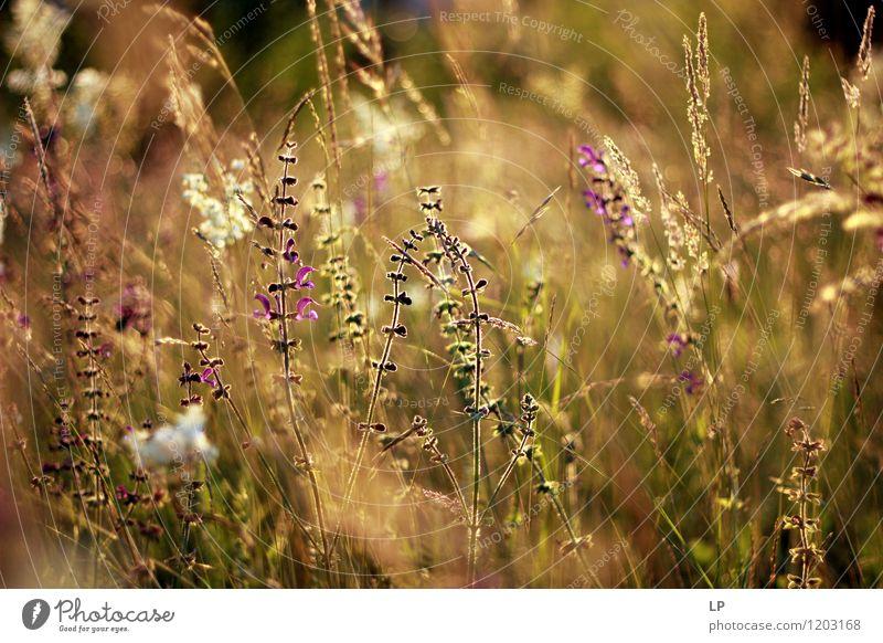 Natur Pflanze schön Sommer Blume Landschaft Blatt ruhig Freude Umwelt Leben Wärme Frühling Blüte Gefühle Herbst