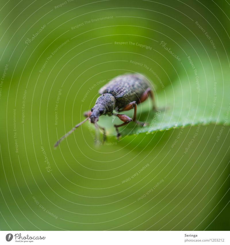 Am Abgrund Tier Käfer 1 fliegen krabbeln Blick blau braun mehrfarbig grün Farbfoto Außenaufnahme Nahaufnahme Detailaufnahme Makroaufnahme Tag Licht Sonnenlicht