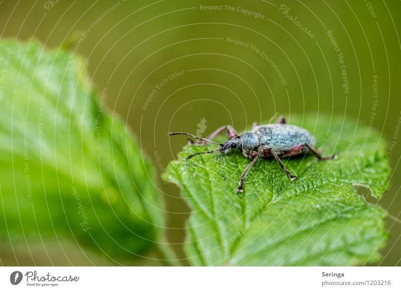 Wohin soll die Reise gehen, heute gar nicht.... keine Lust Natur Pflanze Sommer Sonne Landschaft Tier Wald Wiese Garten fliegen Park Feld Flügel Insekt