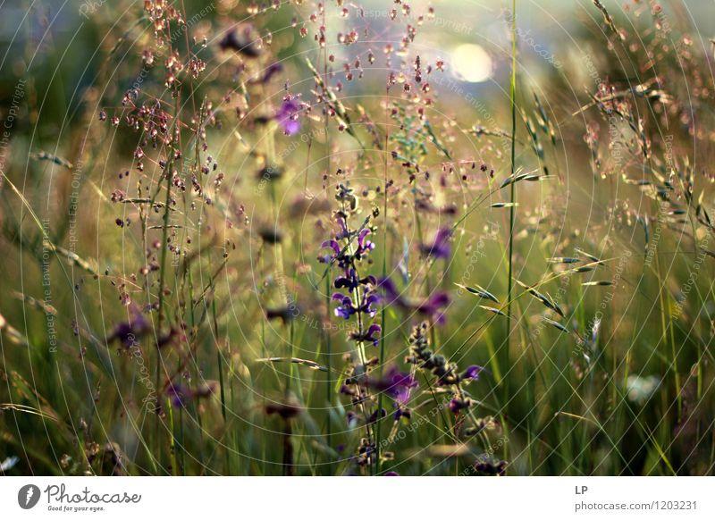 Frühlingskräuter Natur Ferien & Urlaub & Reisen Pflanze Sommer Blume Landschaft Blatt Freude Umwelt Blüte Wiese Gras Garten Horizont Park