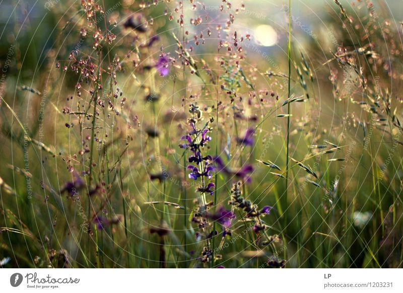Frühlingskräuter Umwelt Natur Landschaft Pflanze Erde Luft Sommer Blume Gras Sträucher Blatt Blüte Wildpflanze Garten Park Wiese Feld einfach Fröhlichkeit