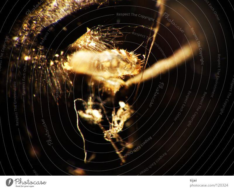 Experimental 1 Haare & Frisuren Insekt Biene Staub Fussel