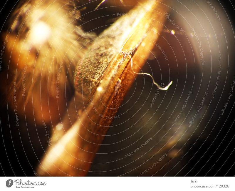 Experimental 2 Haare & Frisuren Insekt Biene Staub