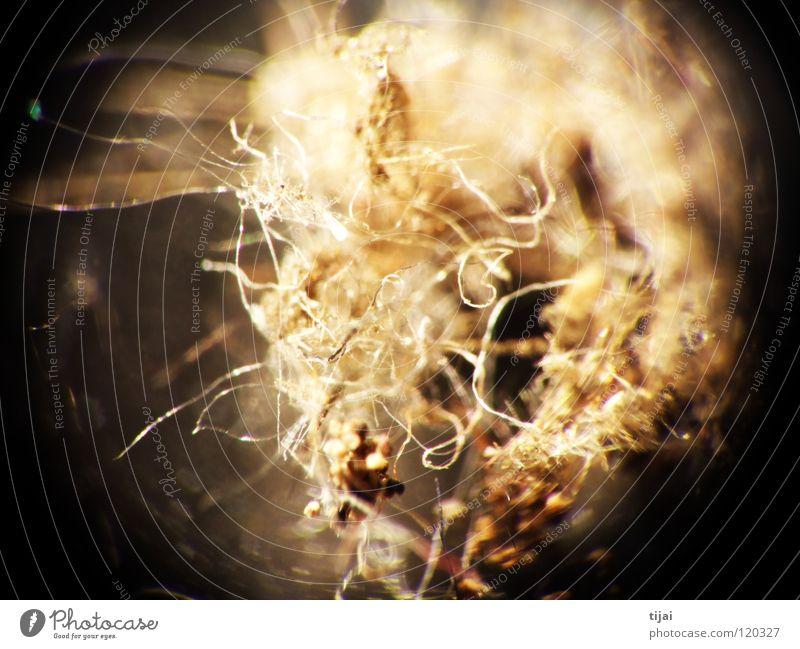 Experimental 3 Haare & Frisuren Insekt Biene Staub Fussel