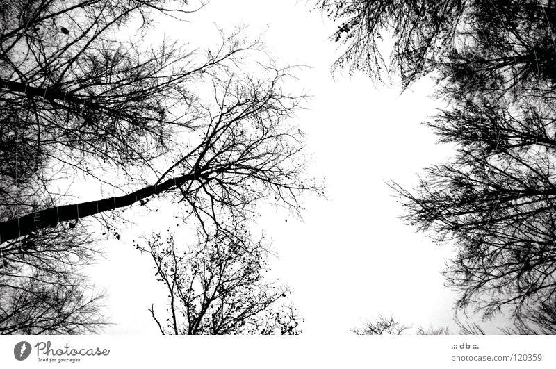 .:: HERBST ::. Herbst Winter Verlobung Wald Baum Waldlichtung Schwarzweißfoto Spaziergang