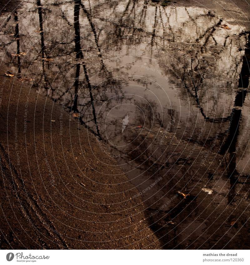 Pfütze Winter Einsamkeit ruhig Stimmung Sehnsucht Baum Wald Gedanke Erfahrung Jahreszeiten dunkel Waldrand geheimnisvoll Sonnenuntergang Silhouette gefroren