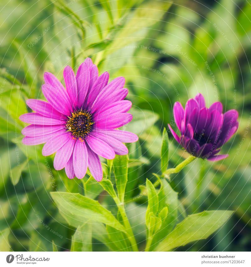 zweisamkeit Natur Pflanze Blume Garten Park schön Duft Gefühle Gesundheit Glück Idylle Lebensfreude Optimismus Sinnesorgane Umwelt Umweltschutz