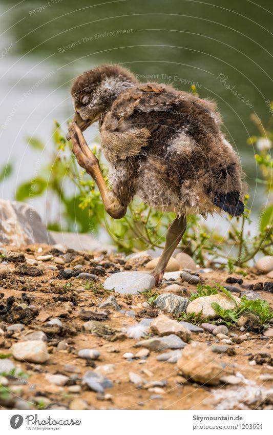 Schnabel juckt Natur Pflanze schön Sommer Landschaft Tier Umwelt Tierjunges Frühling Wiese See Vogel Zufriedenheit Wetter Feld stehen