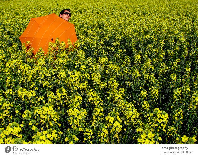 Sonnenanbeter Mann Jugendliche Blume blau Pflanze Sommer Freude Ferien & Urlaub & Reisen ruhig Wolken gelb Erholung Wiese springen Blüte Frühling