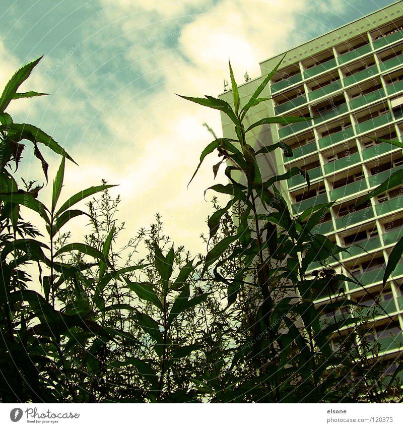 WILDWUCHS:: Pflanze Sommer Haus Wolken Leben schlafen Sträucher Häusliches Leben Dresden Hotel Balkon Plattenbau