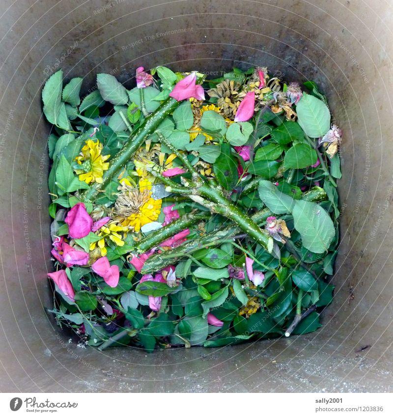Blick in die Garten-Biotonne... Natur alt Pflanze grün Blume Blatt dreckig Vergänglichkeit kaputt Rose Verfall Müll Duft werfen Trennung Gartenarbeit