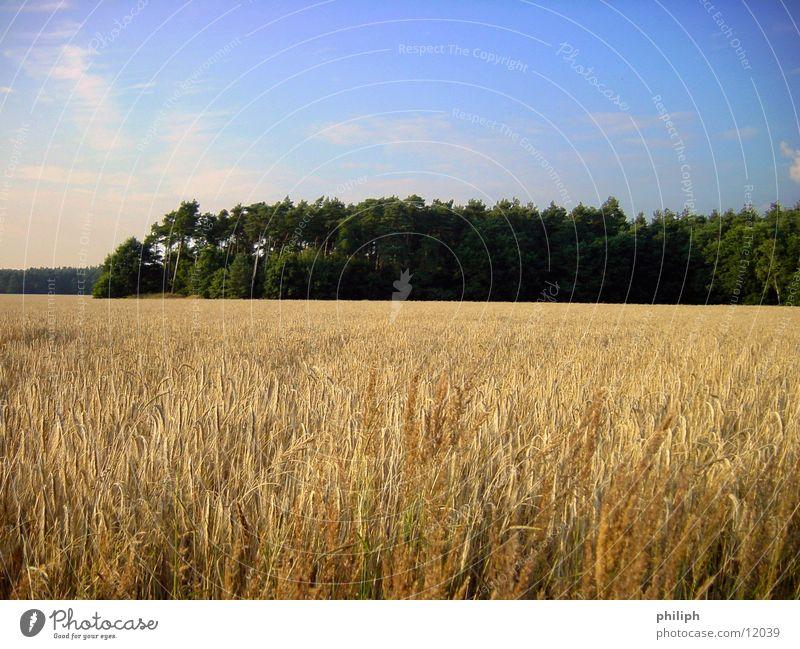 Feld&Wald Gerste Korn field corn Bauernhof harvest