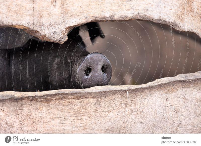 Was geht? Freude Tier schwarz Traurigkeit Glück glänzend authentisch beobachten Kommunizieren Romantik Neugier Wohlgefühl Kontakt Erwartung gefangen friedlich