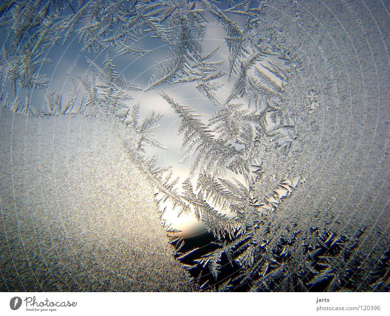 Durchblick Eisblumen Eiskristall Winter kalt Fenster Wolken Kristallstrukturen Frost Himmel jarts