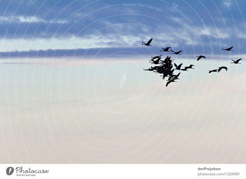Das ist kein Formationsflug Natur Ferien & Urlaub & Reisen Pflanze Landschaft Freude Tier Ferne Umwelt Gefühle Herbst Freiheit fliegen Vogel Tourismus Kraft