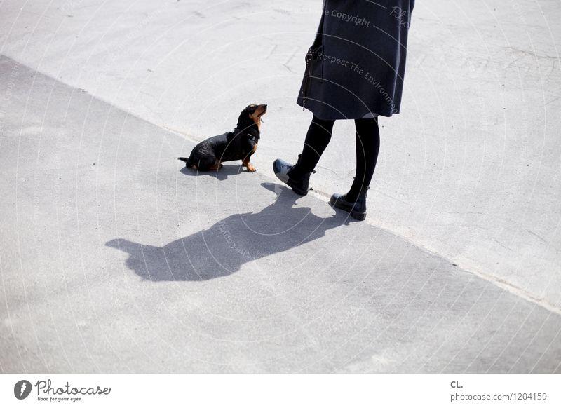 erwartungshaltung Freizeit & Hobby Mensch feminin Frau Erwachsene Leben 1 30-45 Jahre Schönes Wetter Mantel Tier Haustier Hund Dackel Boden beobachten niedlich
