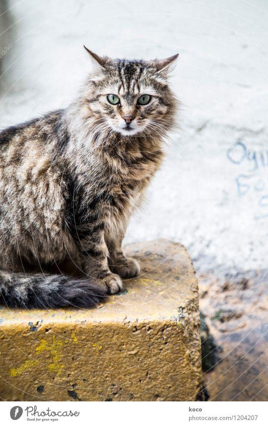 Katzenportrait. alt grün Tier schwarz gelb grau Stein braun sitzen Haustier