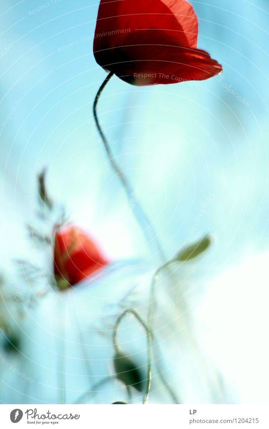 Himmel Natur Pflanze schön Blume rot Blatt Freude Umwelt Wärme Gefühle natürlich Stimmung Luft Erde weich