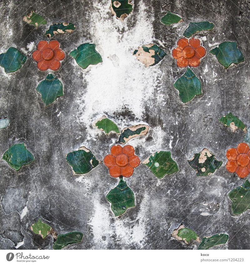 Blümchen alt Pflanze grün weiß Blume rot Blatt Wand Blüte Mauer grau Stein Fassade Dekoration & Verzierung Wachstum Beton