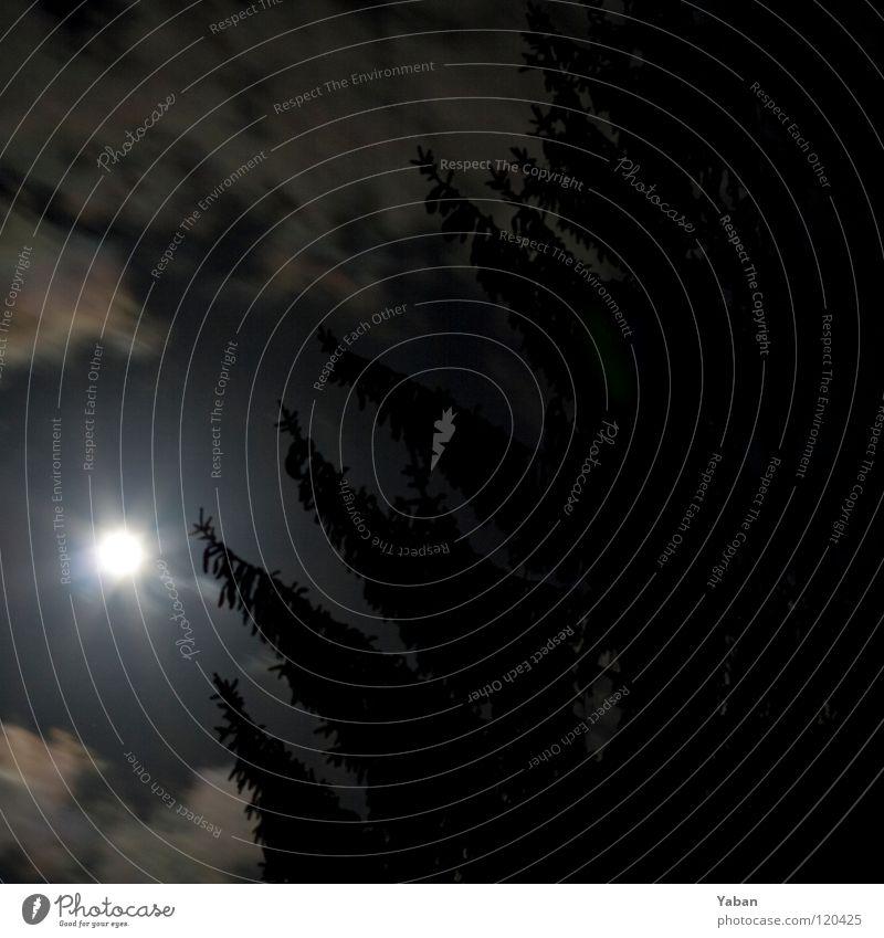 Moonlight Shadow Mondschein Vollmond Silhouette Nacht Nachthimmel dunkel unheimlich Wolken Tanne Hinterhof Himmel Langzeitbelichtung Schatten